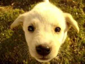 puppy zindelijk maken